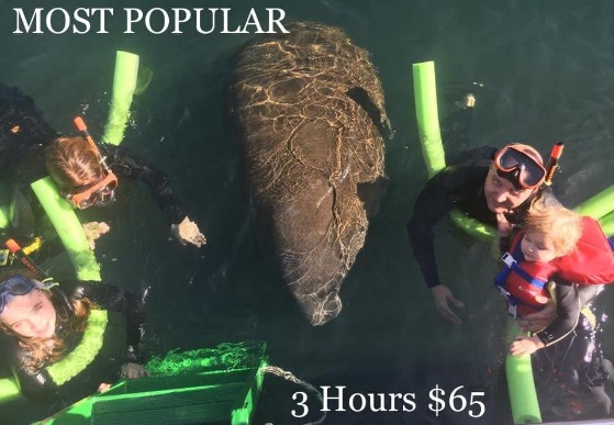 3.0 HOURS OF MANATEE TOURS